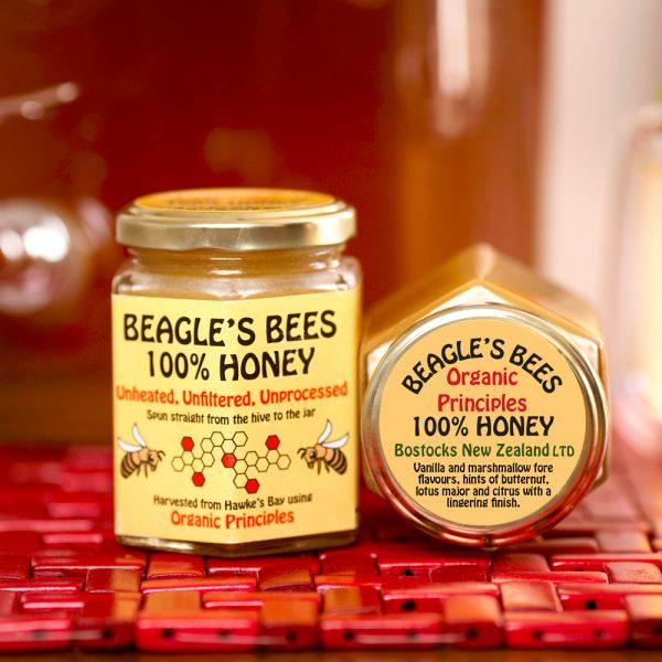 TerraLynnPhoto Beagle Bostocks Honey IMG_3359