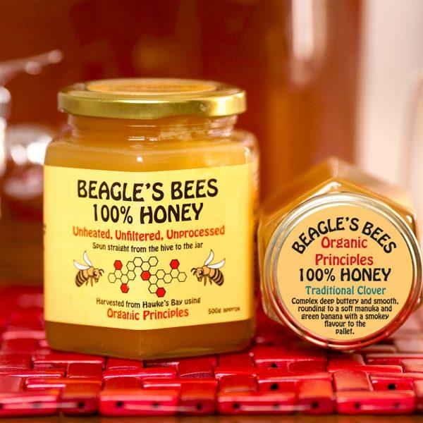 TerraLynnPhoto Beagle Clover Honey IMG_3355