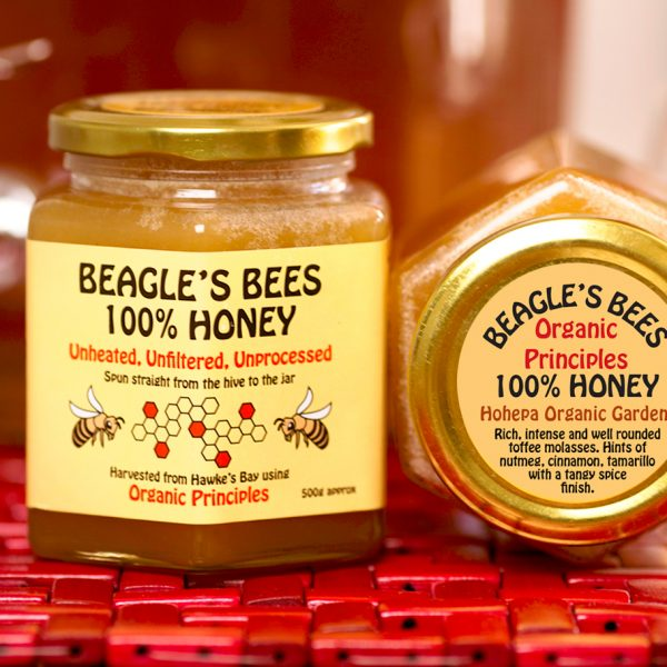 TerraLynnPhoto Beagle Hohepa Honey IMG_3353